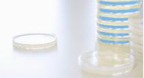 Full-Length cDNA Library